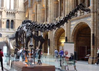 Dippy the dinosaur is on tour in Northern Ireland this Autumn.
